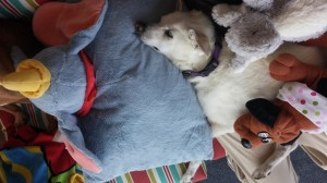 Bailey resting with stuffed animals